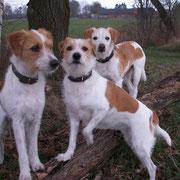 von links...Nuby, Deetje und Ekna