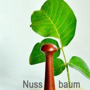 edler Nussbaum