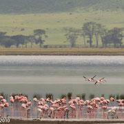 Flamingo'ss