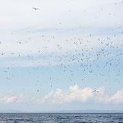 Jan van genten boven de zee