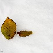 Blad in de sneeuw