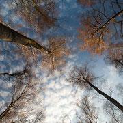 Bomen in het avondlicht
