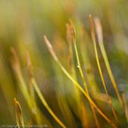 Waterdruppels op mos