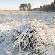 Leersumse veld onder de sneeuw