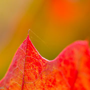 Eikenbladen met herfstkleur