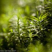 Waterdruppels in het groen