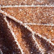 Boomblad met ijskristallen
