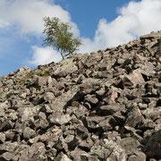 Boom en rotsen bij Njupeskär waterval