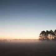 Nevel bij zonsopkomst Leersumse veld