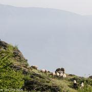 Herder in de bergen