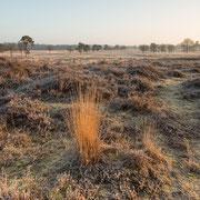 Ochtendzon over Leersumse veld