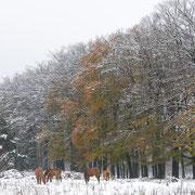 Paarden in de nseeuw