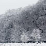 Sneeuw en bomen