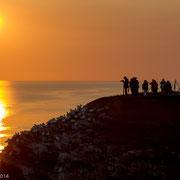 Helgoland: Vogels en fotografen