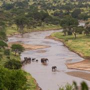 Olifanten in de Tarangire rivier