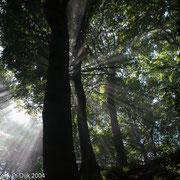 Lichtharp in bos
