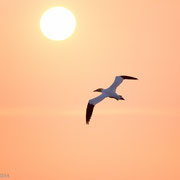 Jan van Gent bij zonsopkomst