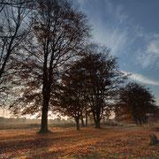 Herfst op het Leersumse veld