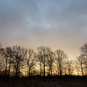 Bomen in licht zonsopkomst
