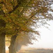 Herfst en nevel op het Leersumse veld