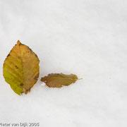 Bladen in de sneeuw