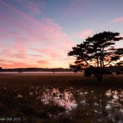 Zonsondergang Leersumse veld