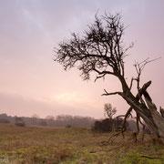 Boom in het licht van de opkomende zon