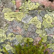Korstmossen op steen
