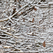 Takken en sneeuw