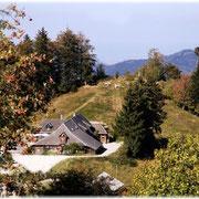 Kälbele-Scheuer 1