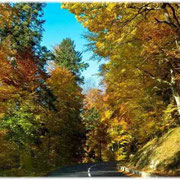 Herbst im Elsass