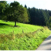 Richtung Biederbach 2