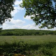 vue dur les champs et le bois en bordure du hammeau
