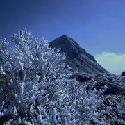 樹氷と久住山