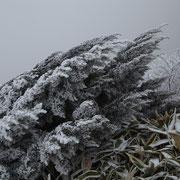 凍てつく2