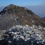 樹氷と中岳