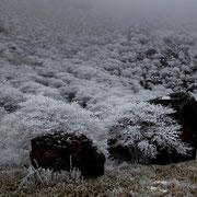 凍てつく庭園
