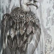 Bartgeier 15 x 10 cm