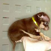 Фото щенков супер мини
