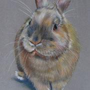 Canel le lapin - Pastel sec sur pastelmat -  - Vendu