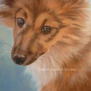 Lassie - Pastel à l'huile sur pastelpad