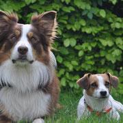 Pioneer und Bella