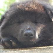 Ich bin viel zu müde.