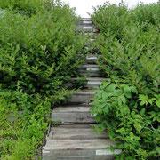 階段の木箱は、弾薬が入っていたと思われる。