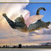 Misury soñando con volar