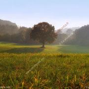 Wunschbaum auf einem Feld im leichten Nebel