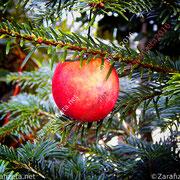 Apfel als Christbaumkugel