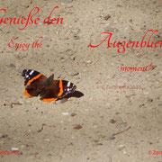 Schmetterling auf Sandweg
