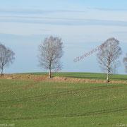 Kahle Bäume auf dem Land
