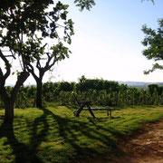 Giardino - area relax
